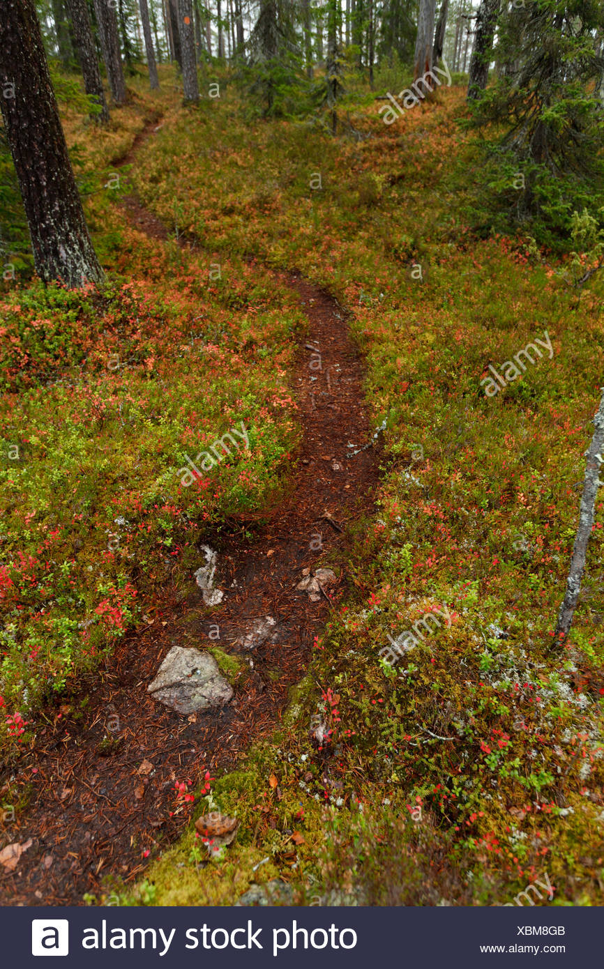 hiking path in the forest - Stock Image