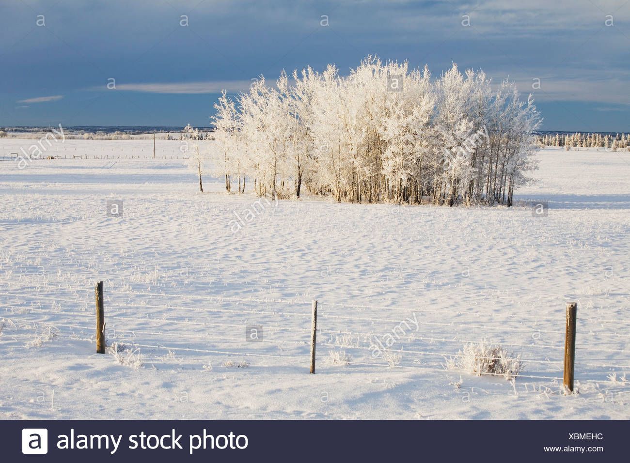 Barb Wire Fence White Stock Photos & Barb Wire Fence White Stock ...