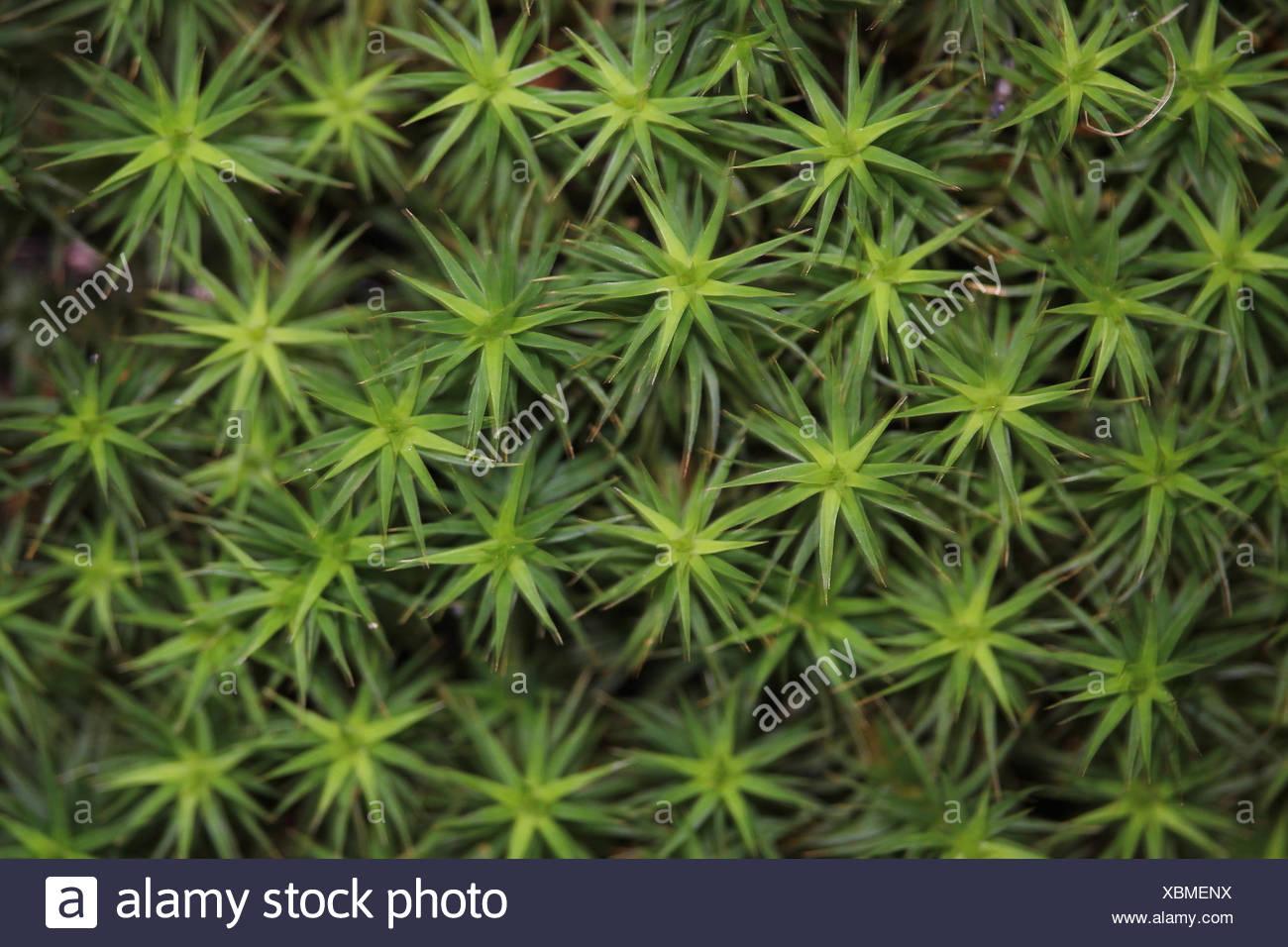 moss - Stock Image