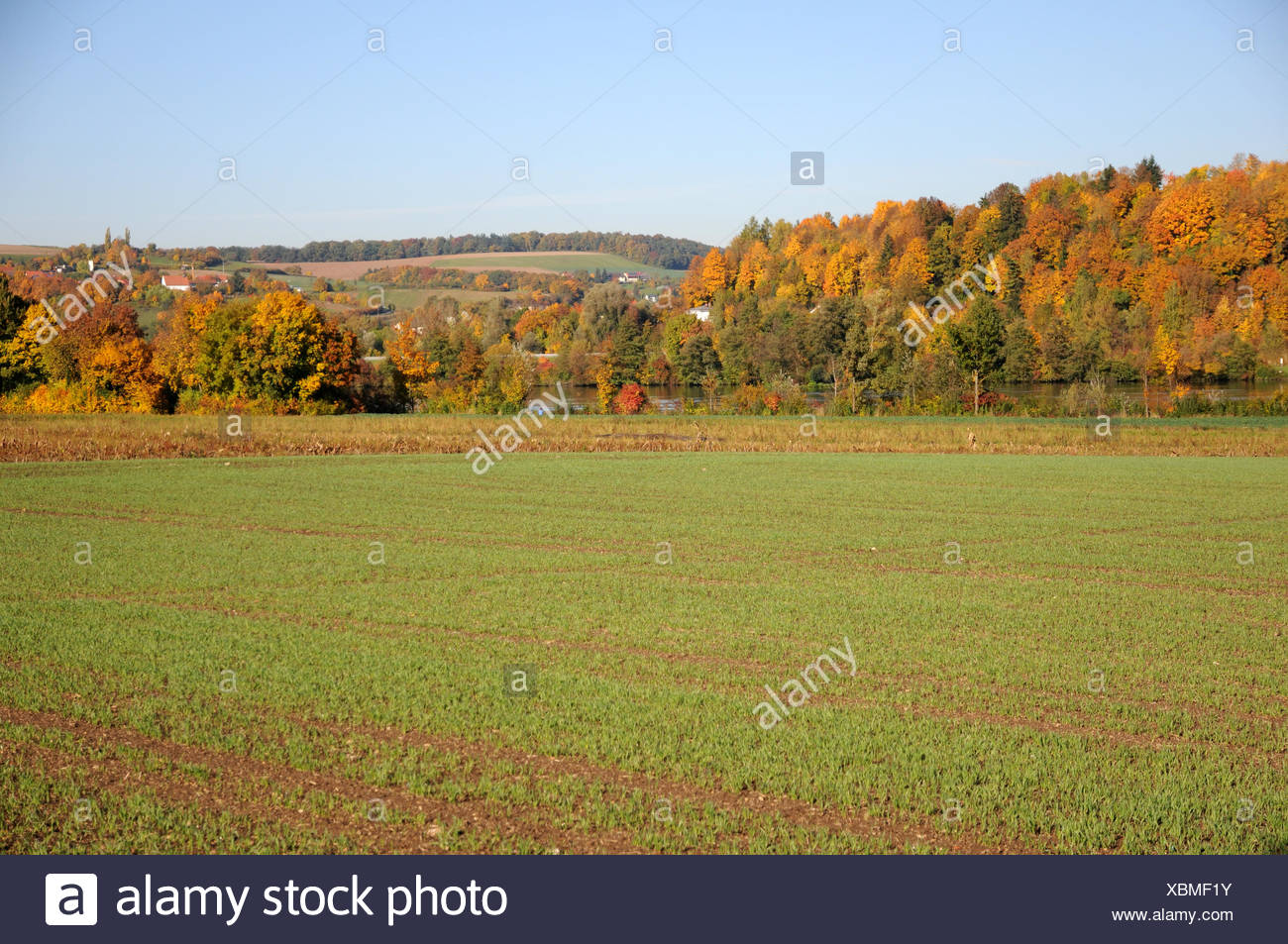 Wheat-field - Stock Image