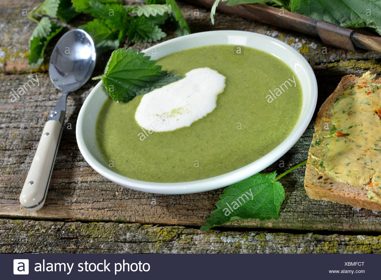 Nettle soup / (Urtica dioica) - Stock Image