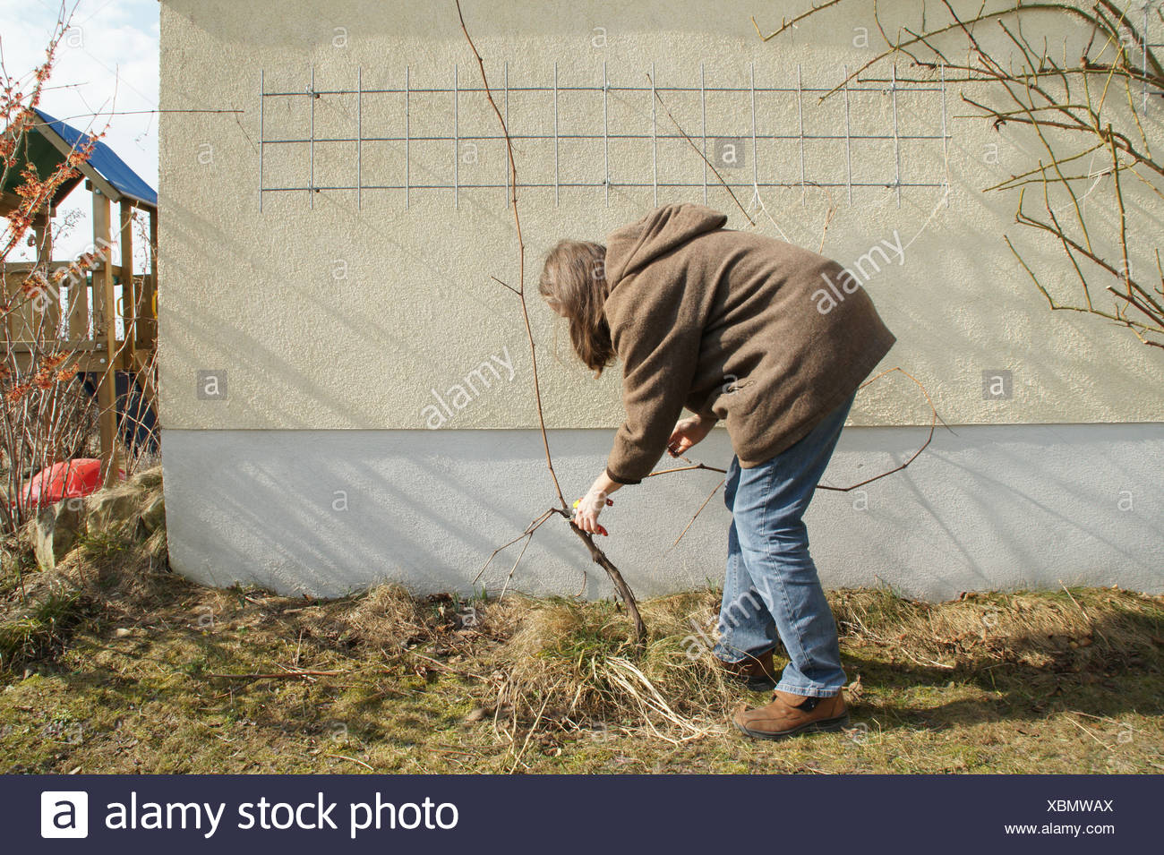 Pruning a grape vine Stock Photo