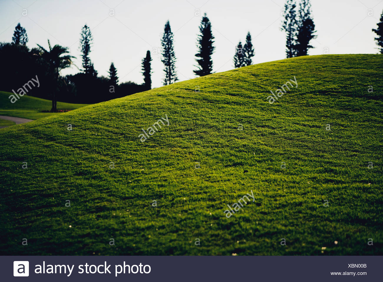Grass at golf course - Stock Image