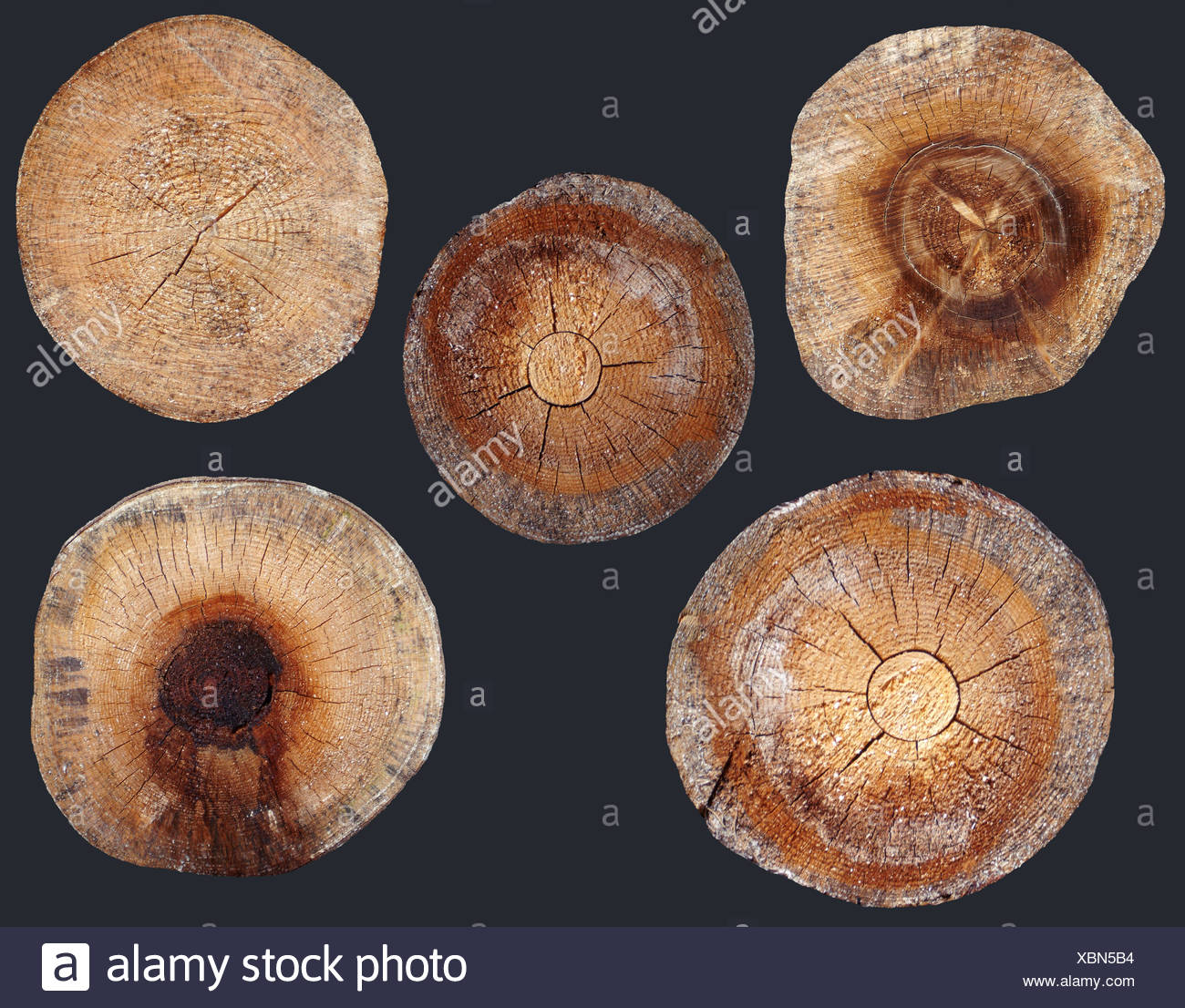 cut tree trunks of spruce Stock Photo