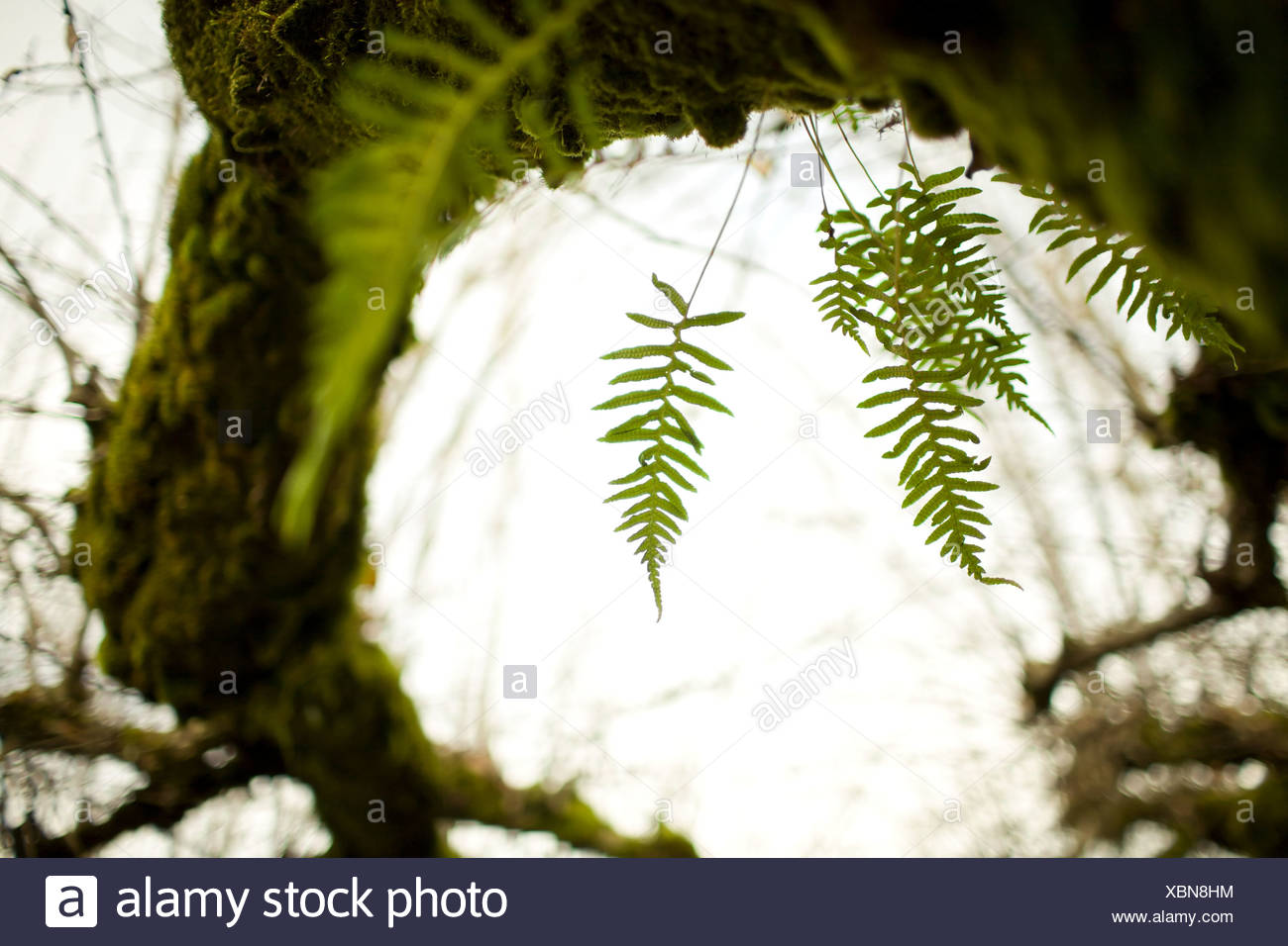 Green moss and fern on tree Stock Photo