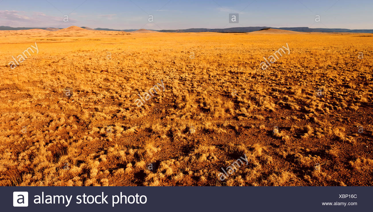 USA, Arizona, Springerville, Golden vastness - Stock Image