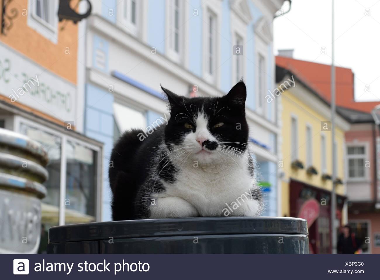 Hauskatze macht es sich am Abfallkuebel mitten am Stadtplatz gemuetlich Stock Photo