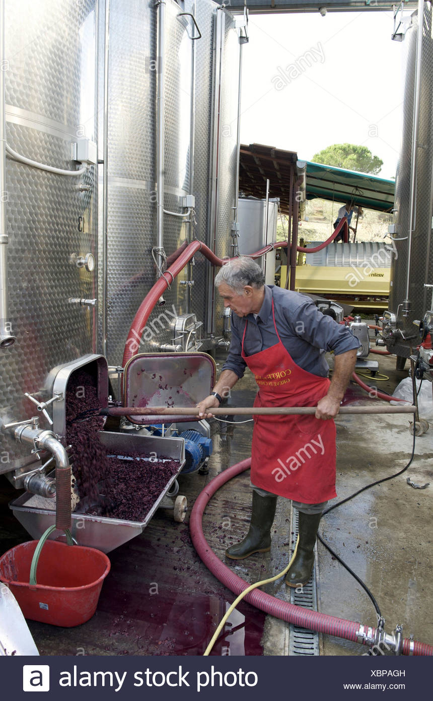 Italy, Tuscany, region Chianti, Greve in Chianti, winegrower in the wine production, Stock Photo