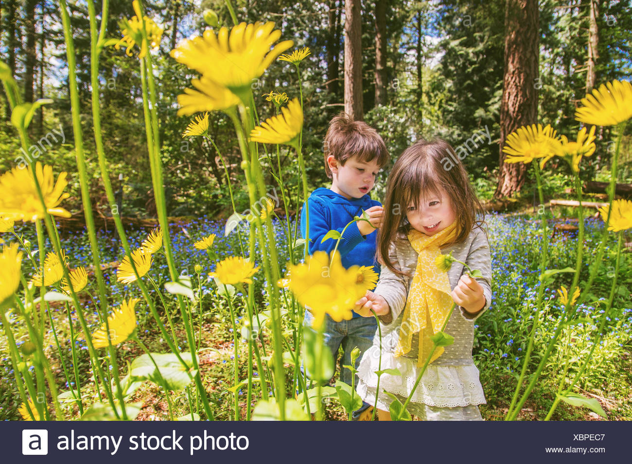 Boy and girl picking yellow flowers in countryside - Stock Image