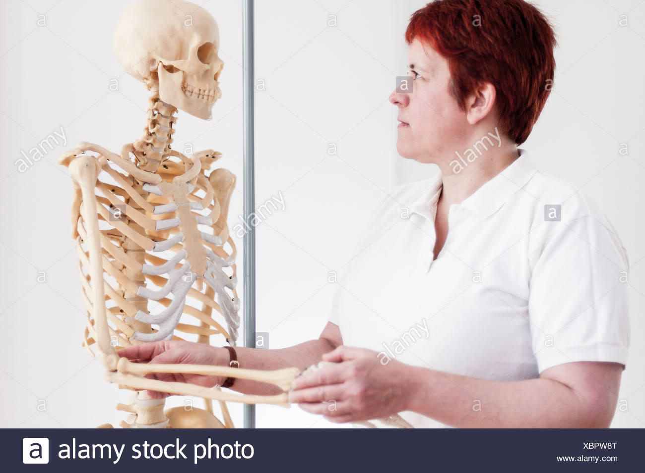 Woman holding arm of model skeleton - Stock Image