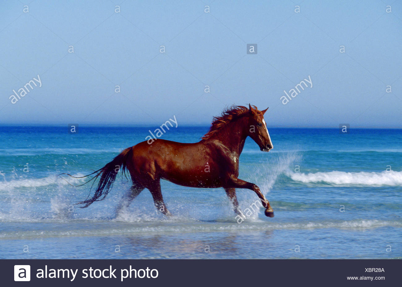 adult galloping on the beach stock photos amp adult