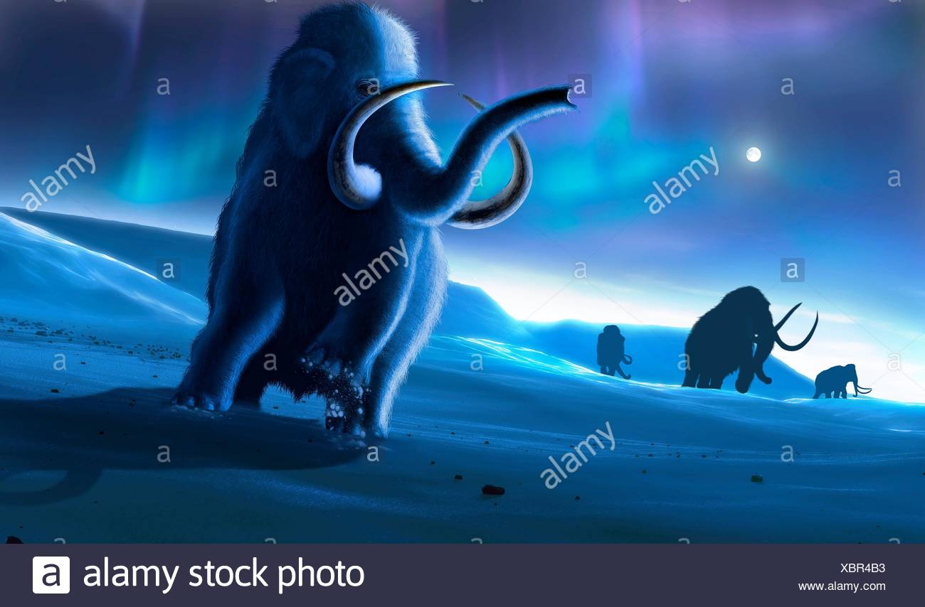 Artwork of the woolly mammoth (Mammuthus primigenius), or tundra mammoth. This animal lived during the Pleistocene epoch and into the early Holocene, and as such coexisted with humans. It was roughly the same size as a modern African elephant. Covered in thick hair, it was well adapted to the cold environment in which it lived - in northern America, Europa and Asia. In the sky, the aurora borealis can be seen. - Stock Image