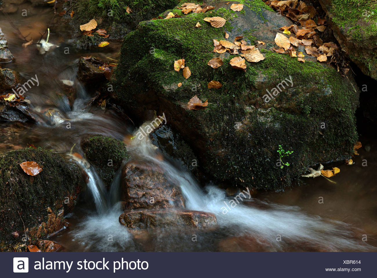 Tabarz, Germany, an autumnal stream in the Thuringian Forest - Stock Image