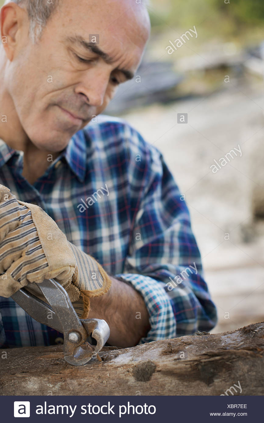 A reclaimed lumber workshop A man preparing the timber by removing all the nails and studs - Stock Image