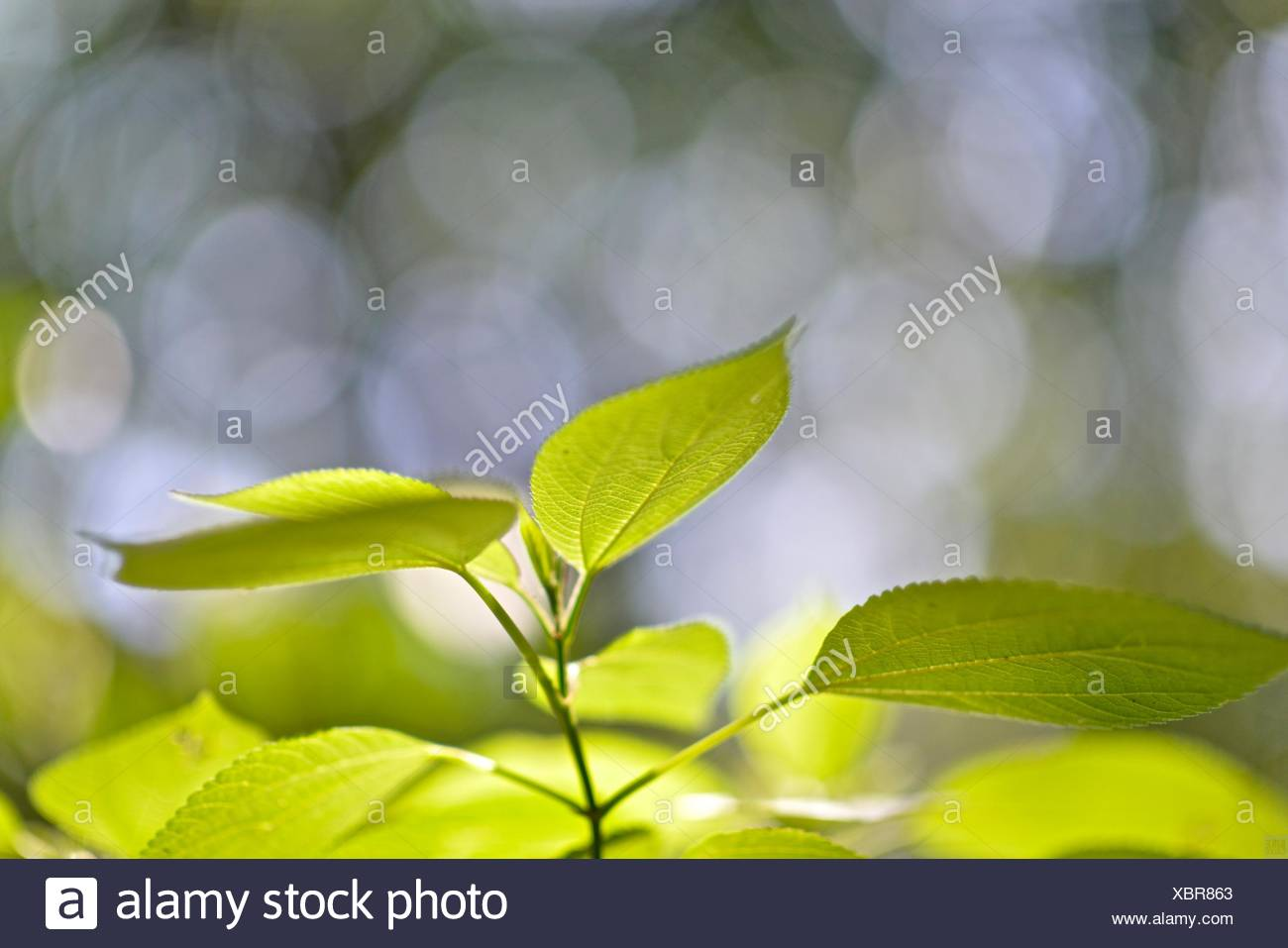 Plant leaves grow in Poco das Antas Biological Reserve. Stock Photo
