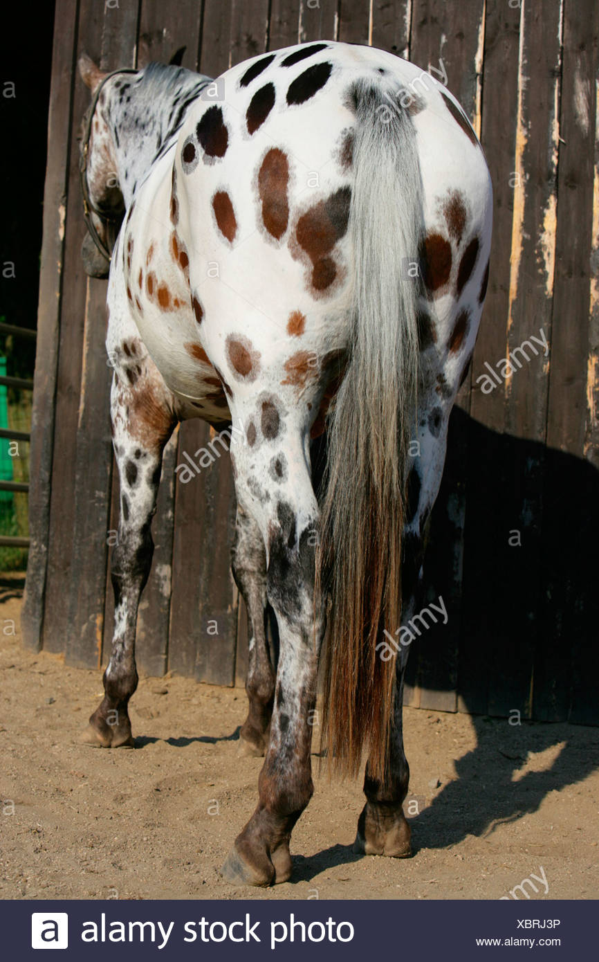 Extensions Stock Photos Extensions Stock Images Alamy