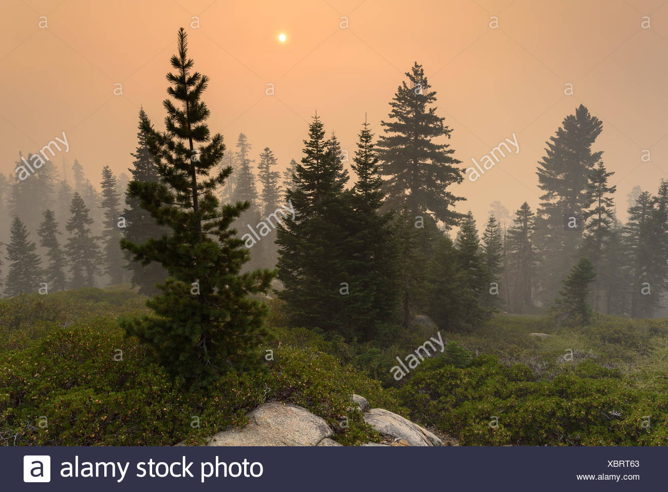Fire near Kings Canyon, Hume California, USA Stock Photo