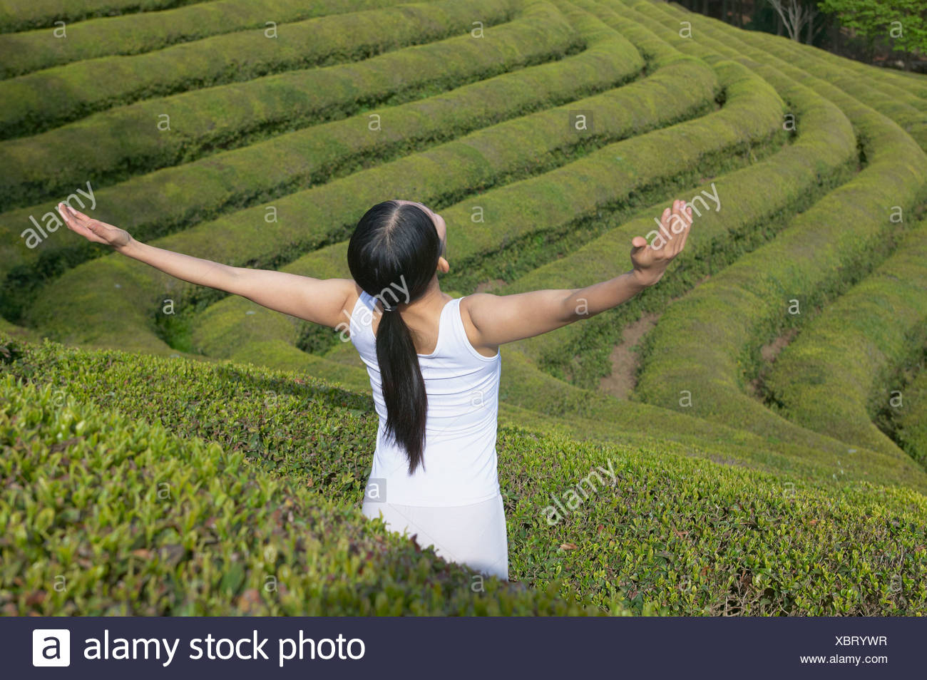 A woman opening her arms in the tea fields - Stock Image