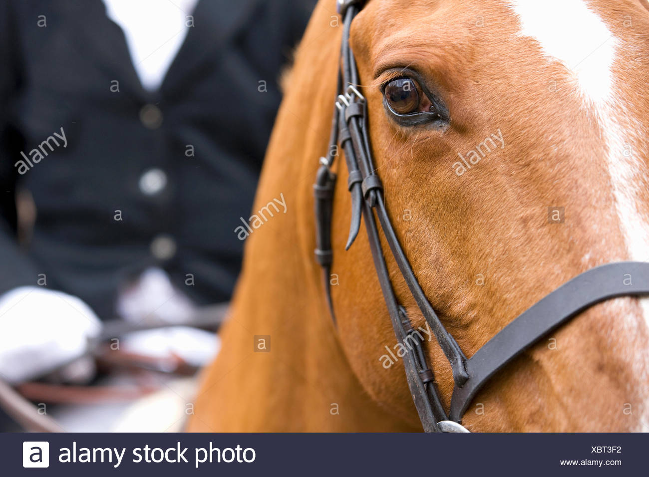 Close-up of horse's head with rider in background - Stock Image