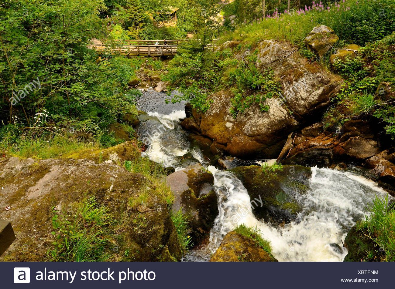Black-Forest Waterfall germany - Stock Image