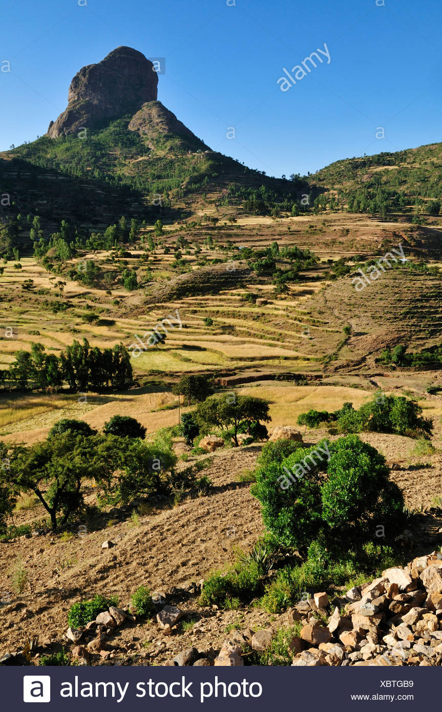 Terraced fields in the Adua, Adwa Mountains in Tigray, Ethiopia, Africa - Stock Image