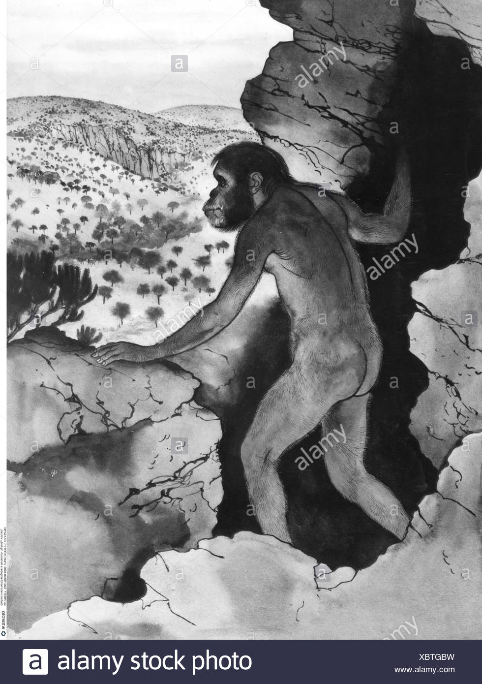 prehistory, life image of the Australopithecus, drawing of Maurice Wilson, Additional-Rights-Clearences-NA - Stock Image