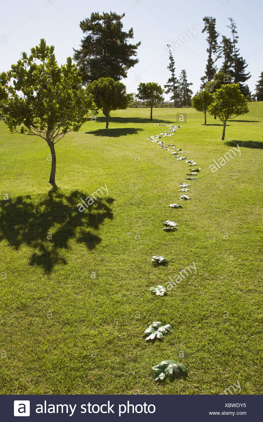 Trail of green leaves through field - Stock Image
