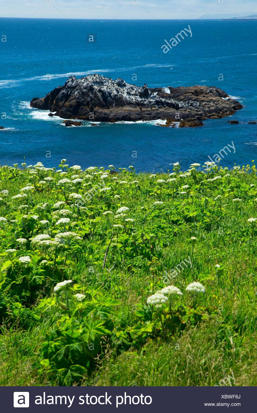 Ocean view, Yaquina Head Outstanding Natural Area, Newport, Oregon. - Stock Image