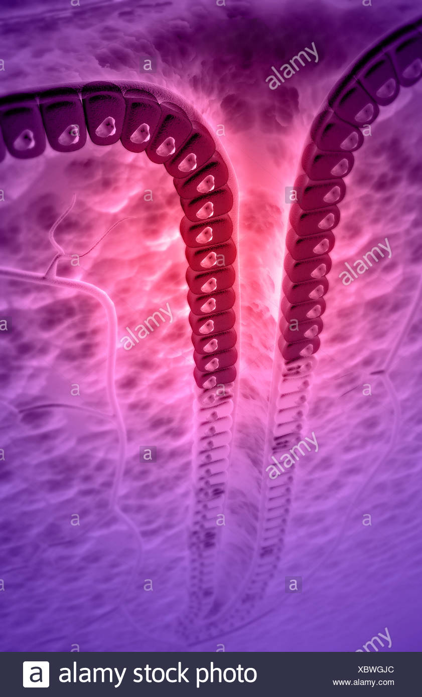 Gastric Pit Stock Photo 282688964 Alamy