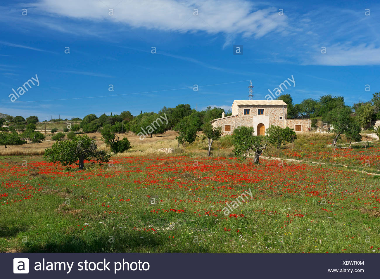 Balearic Islands, Majorca, Mallorca, Spain, Europe, outside, Finca, Fincas, country house, country houses, poppy blossom, scener - Stock Image