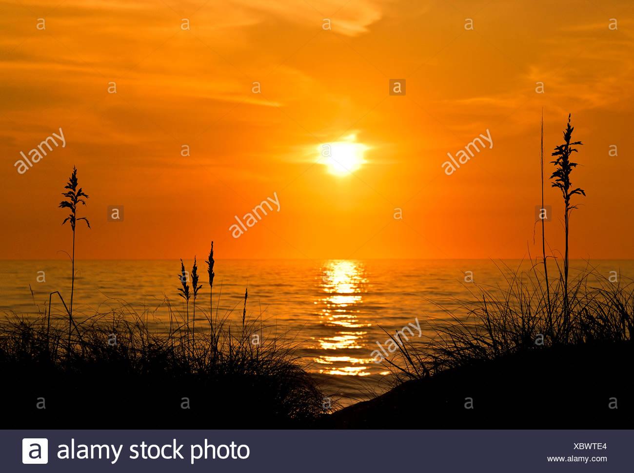 Sea oats sunrise, Outer Banks, North Carolina, USA - Stock Image