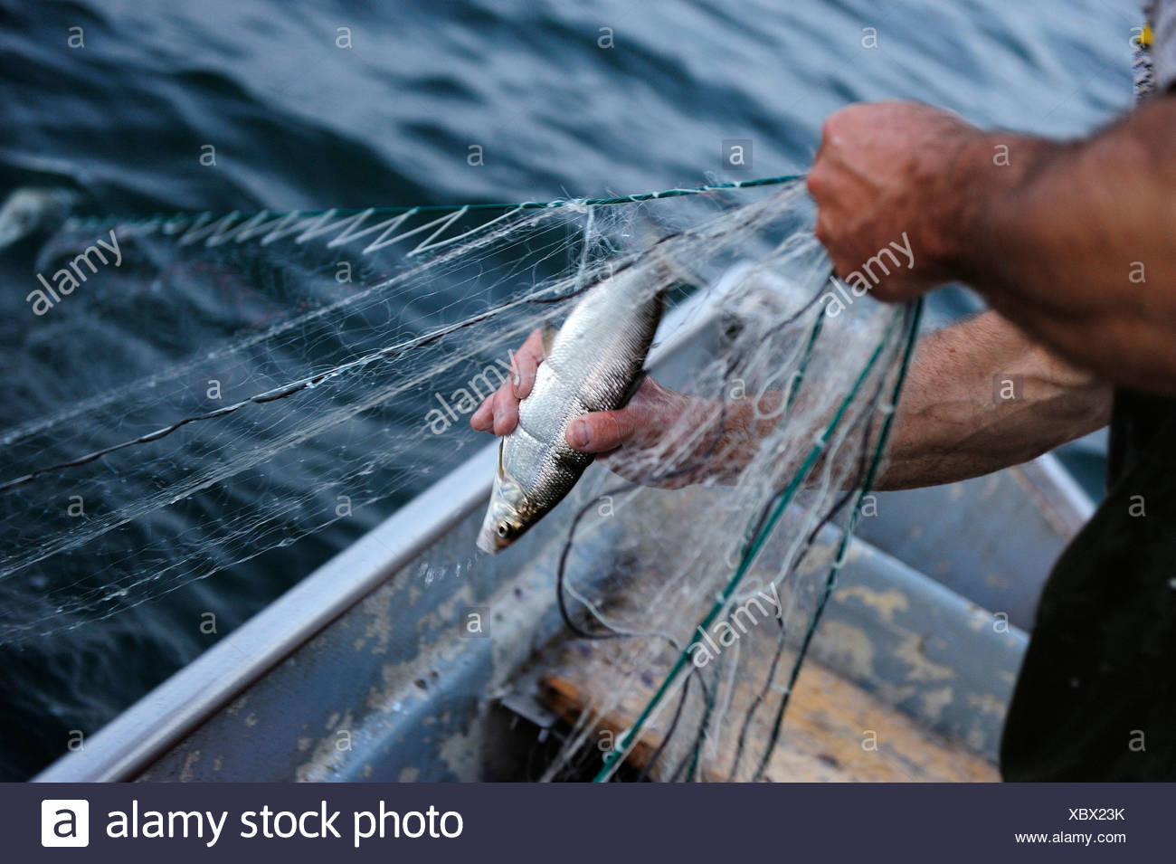 The fisherman Johann Strobl casting for fish on Lake Starnberg, Fuenfseenland area, Upper Bavaria, Bavaria, Germany, Europe - Stock Image