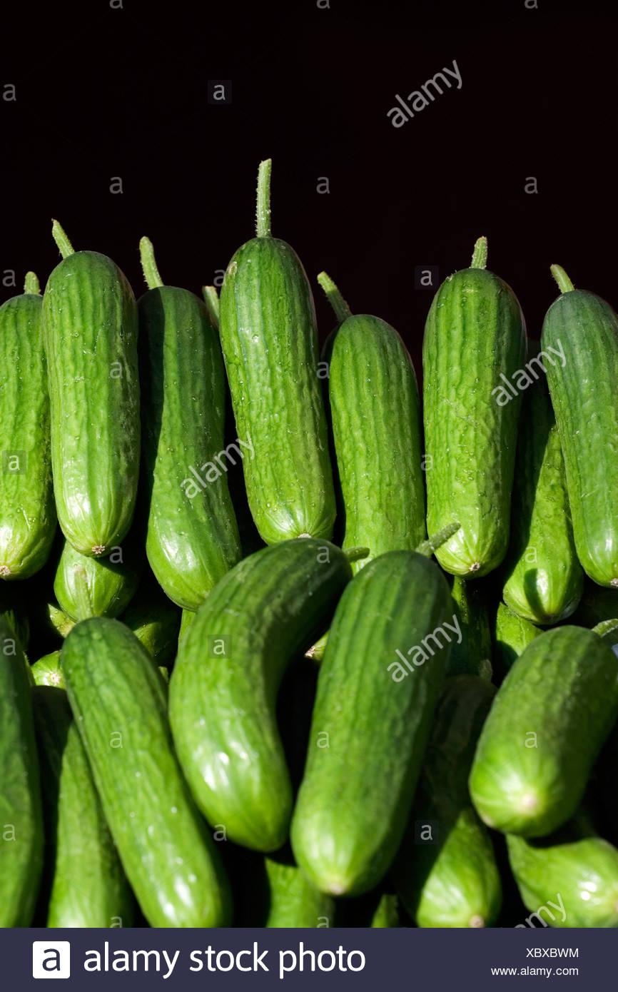 Cucumbers [Cucumis sativus L.] - Stock Image