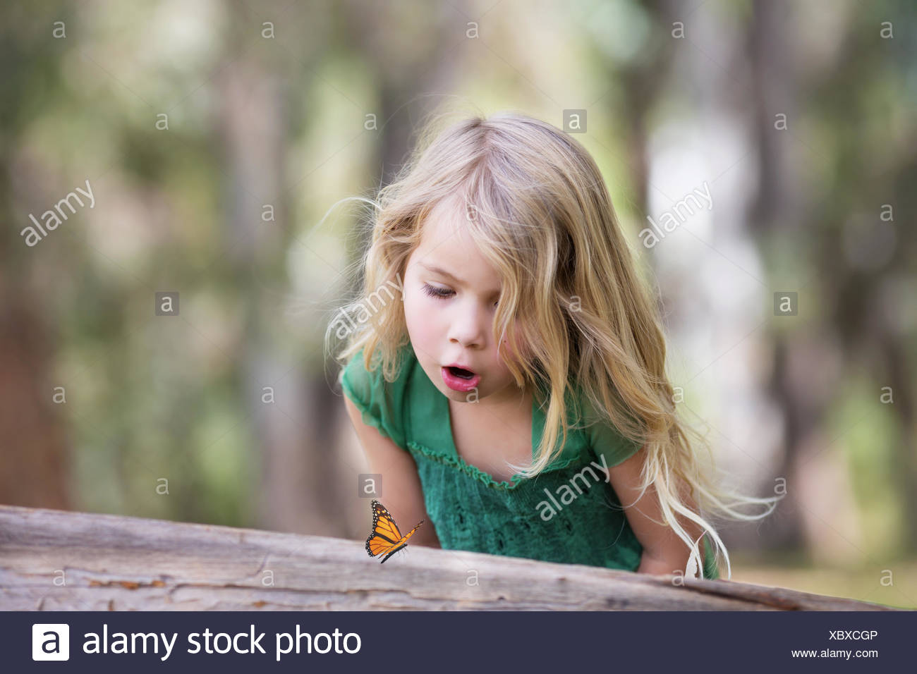 Girl (4-5) looking at butterfly on log - Stock Image