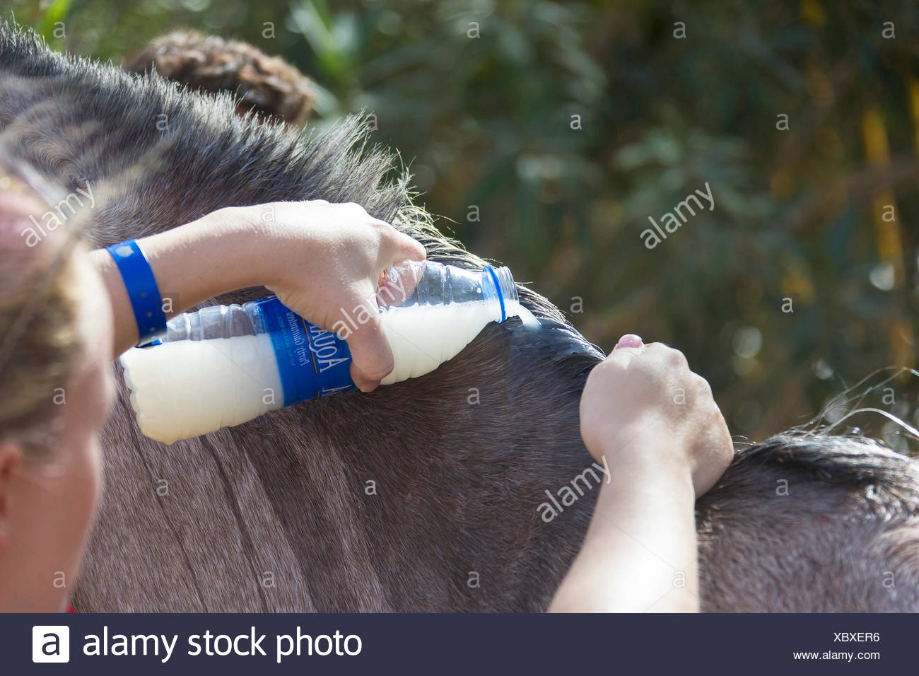 Sweet Itch Horse Stock Photos & Sweet Itch Horse Stock Images - Alamy