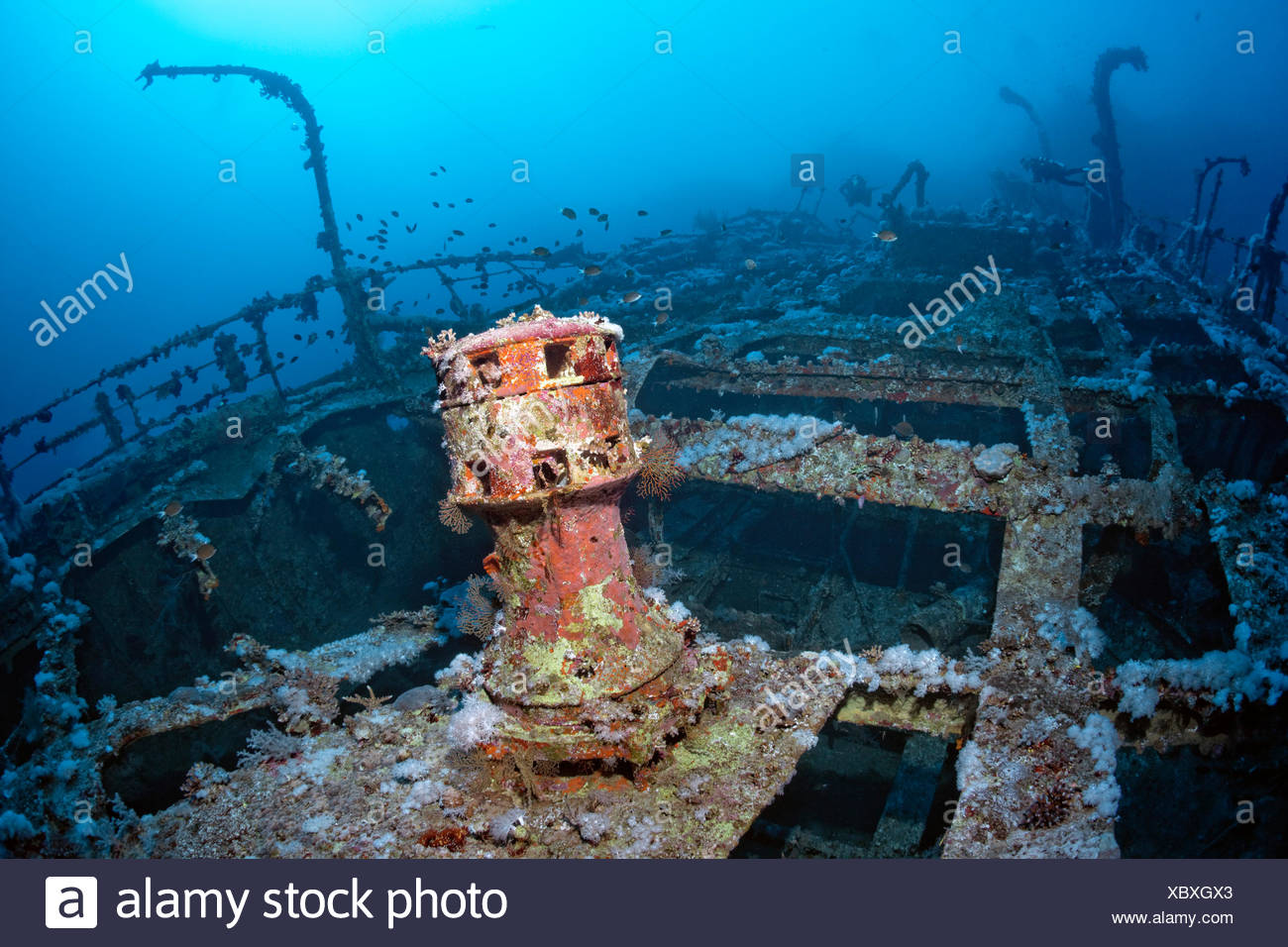 Scuba divers at the shipwreck of Aida, Brother Islands, Egypt - Stock Image