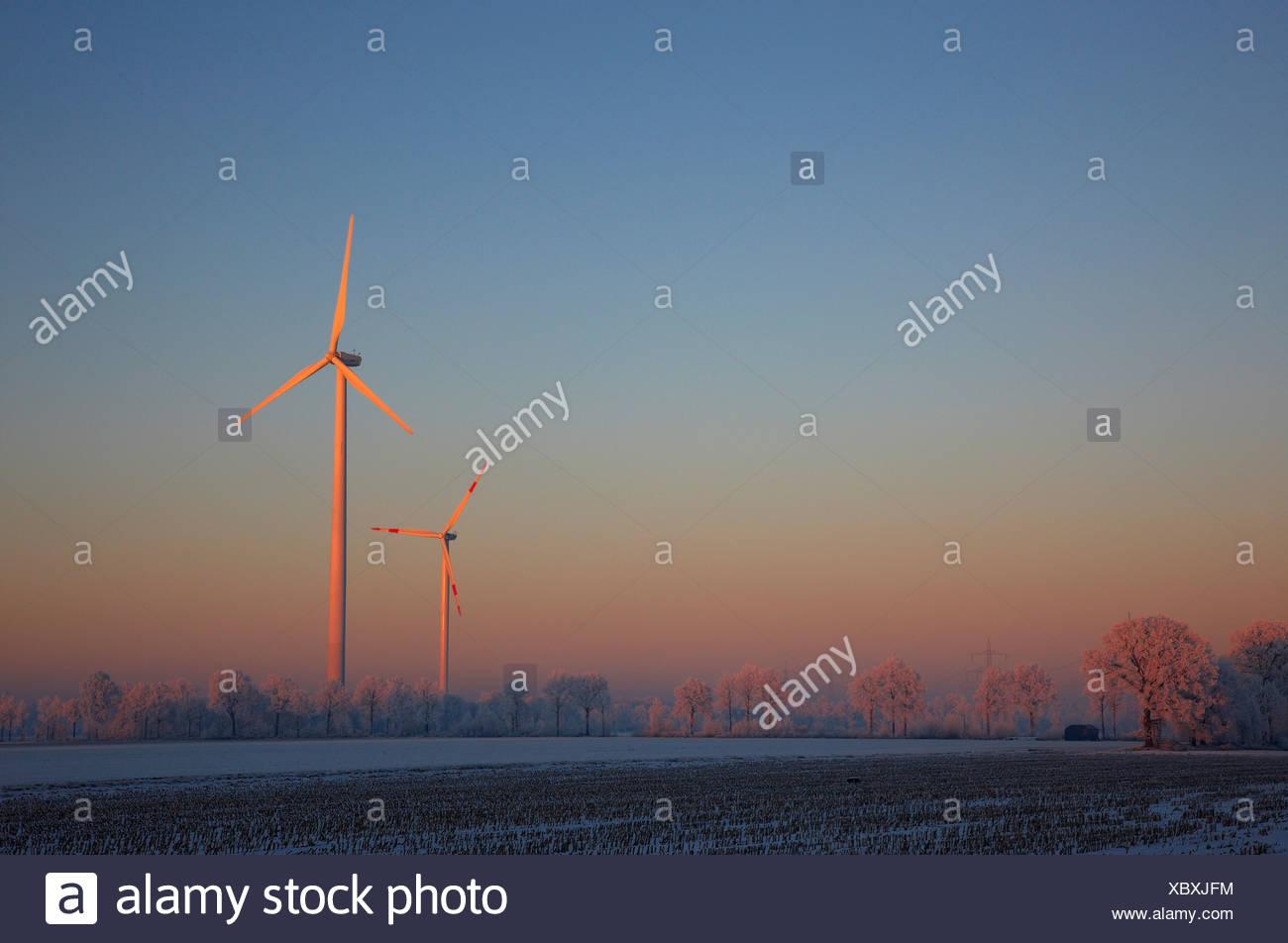 winter morning in the Muensterland with wind wheels, Germany, North Rhine-Westphalia, Steinfurt Stock Photo