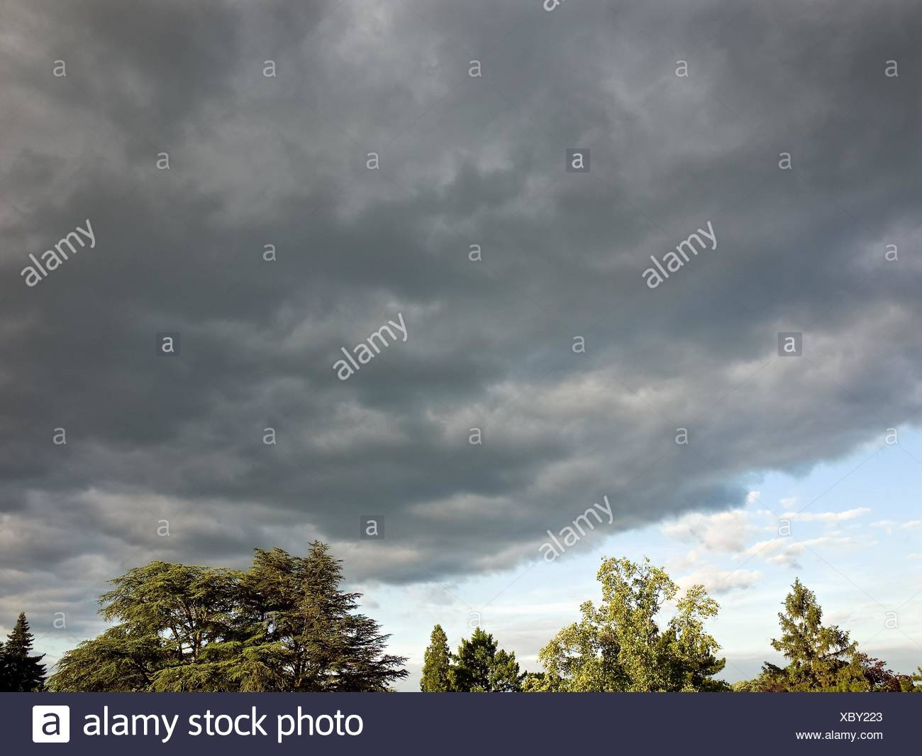 Treetops And Grey Overcast - Stock Image