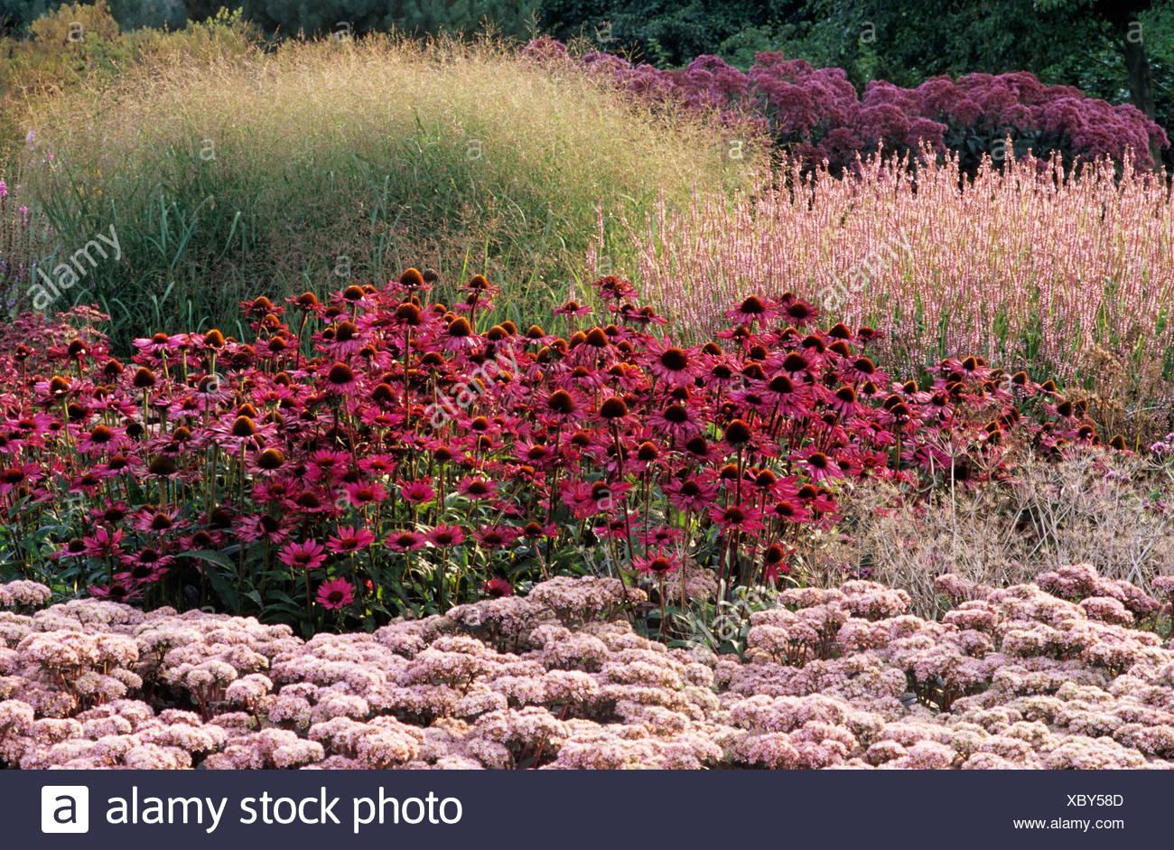 Pensthorpe Millennium Garden Sept Grasses Sedum Echinacea