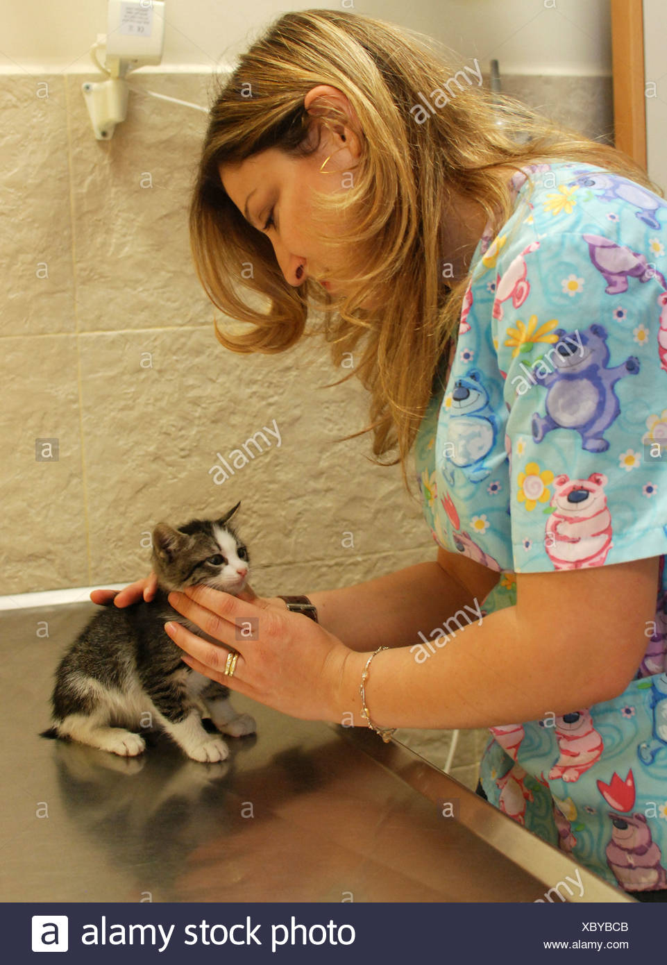 Female vet treats a New born Kitten - Stock Image