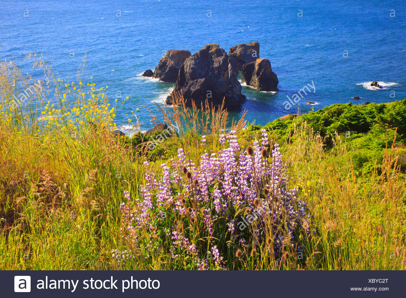 Wildflowers And Afternoon Light Add Beauty To Rock Formations At Humbug Mountain State Park; Oregon, United States of America - Stock Image