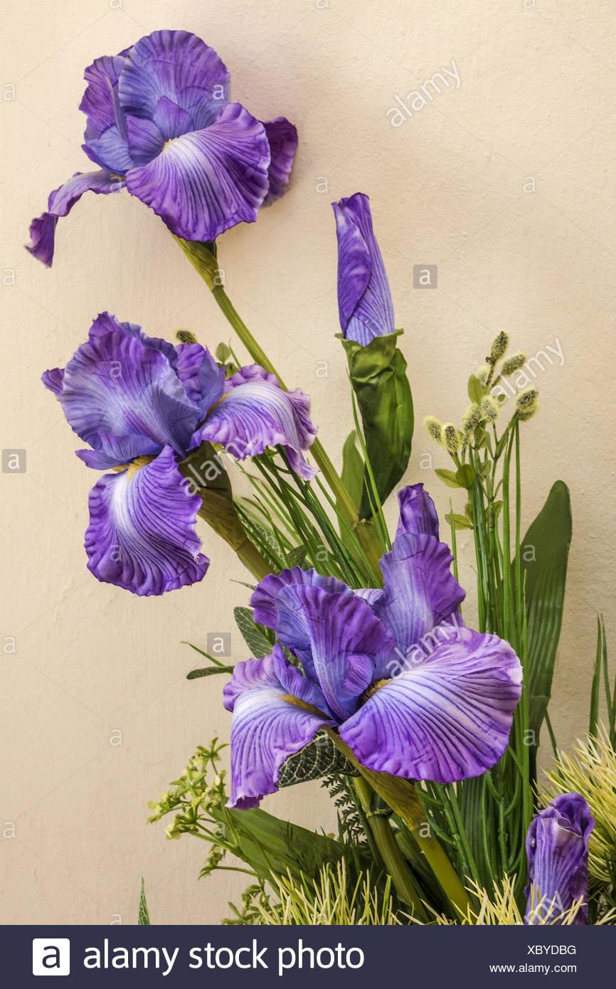 Iris (Iridaceae)  Flower Arrangement Orkney island - Stock Image