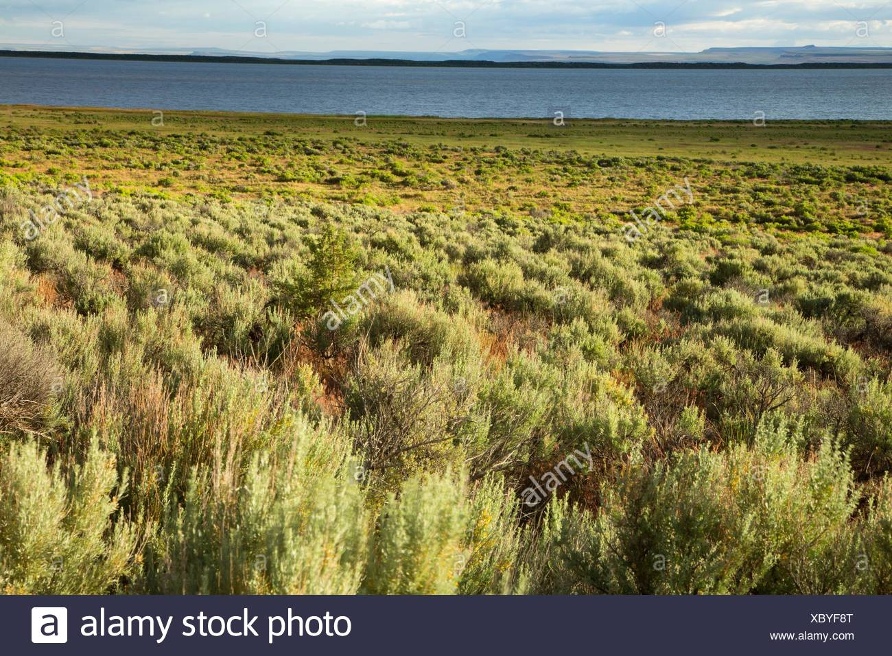 Sagebrush at Campbell Lake, Warner Wetlands Area of Critical Environmental Concern, Lakeview to Steens National Back Country Byway, Oregon. - Stock Image