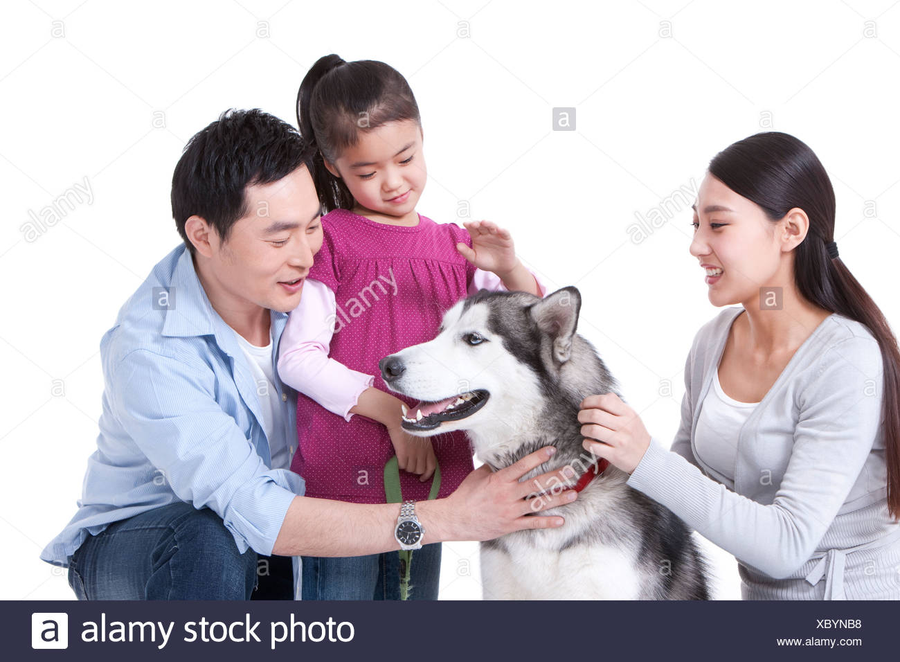 Family playing with a Husky dog - Stock Image