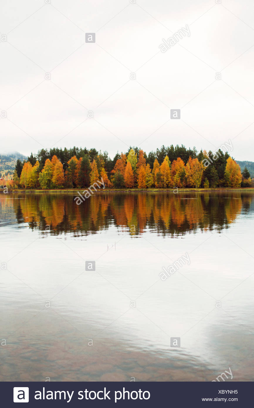 Sweden, Dalarna, Solleron, View of trees on island in autumn - Stock Image