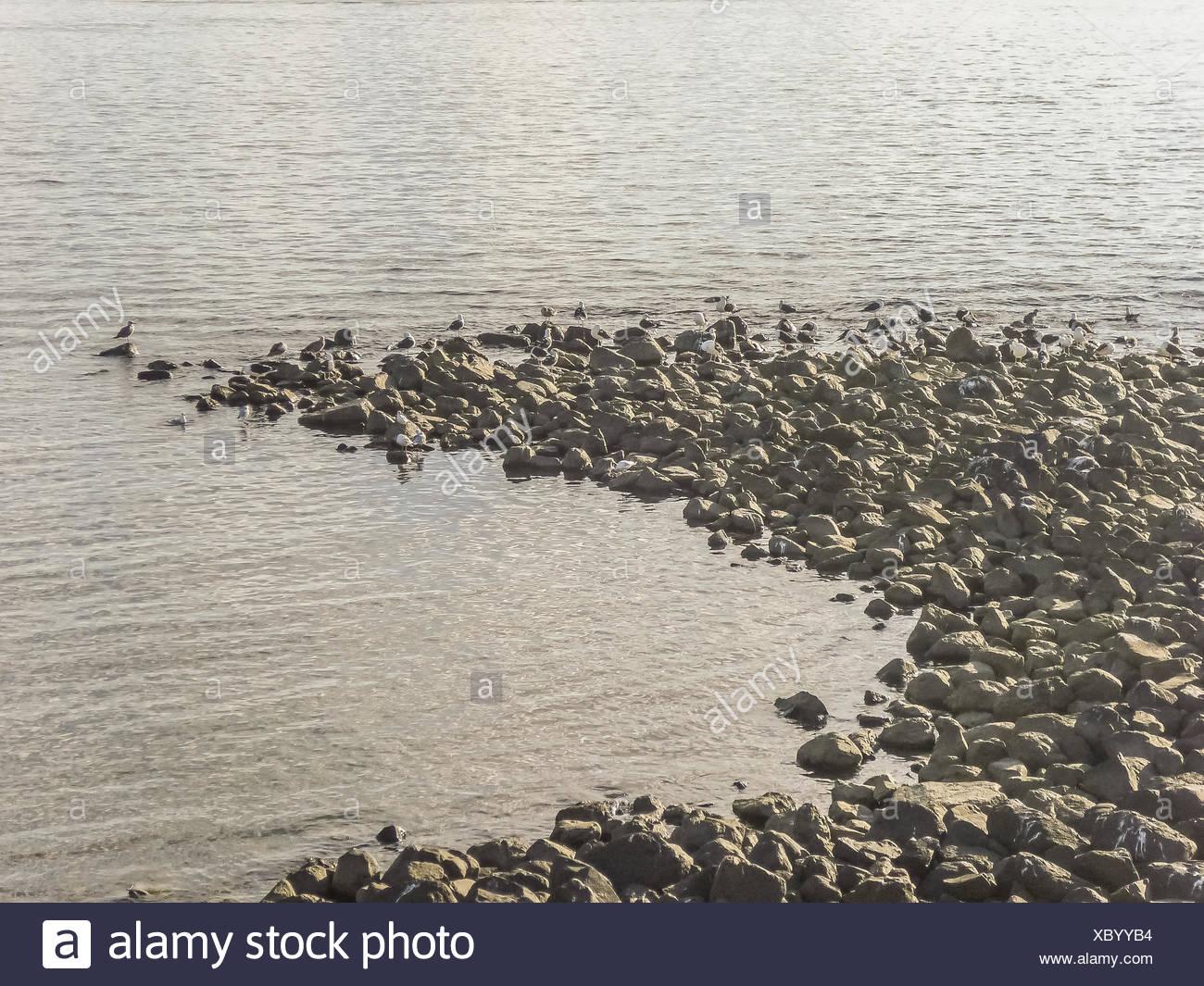 Birds in the Rocks - Stock Image