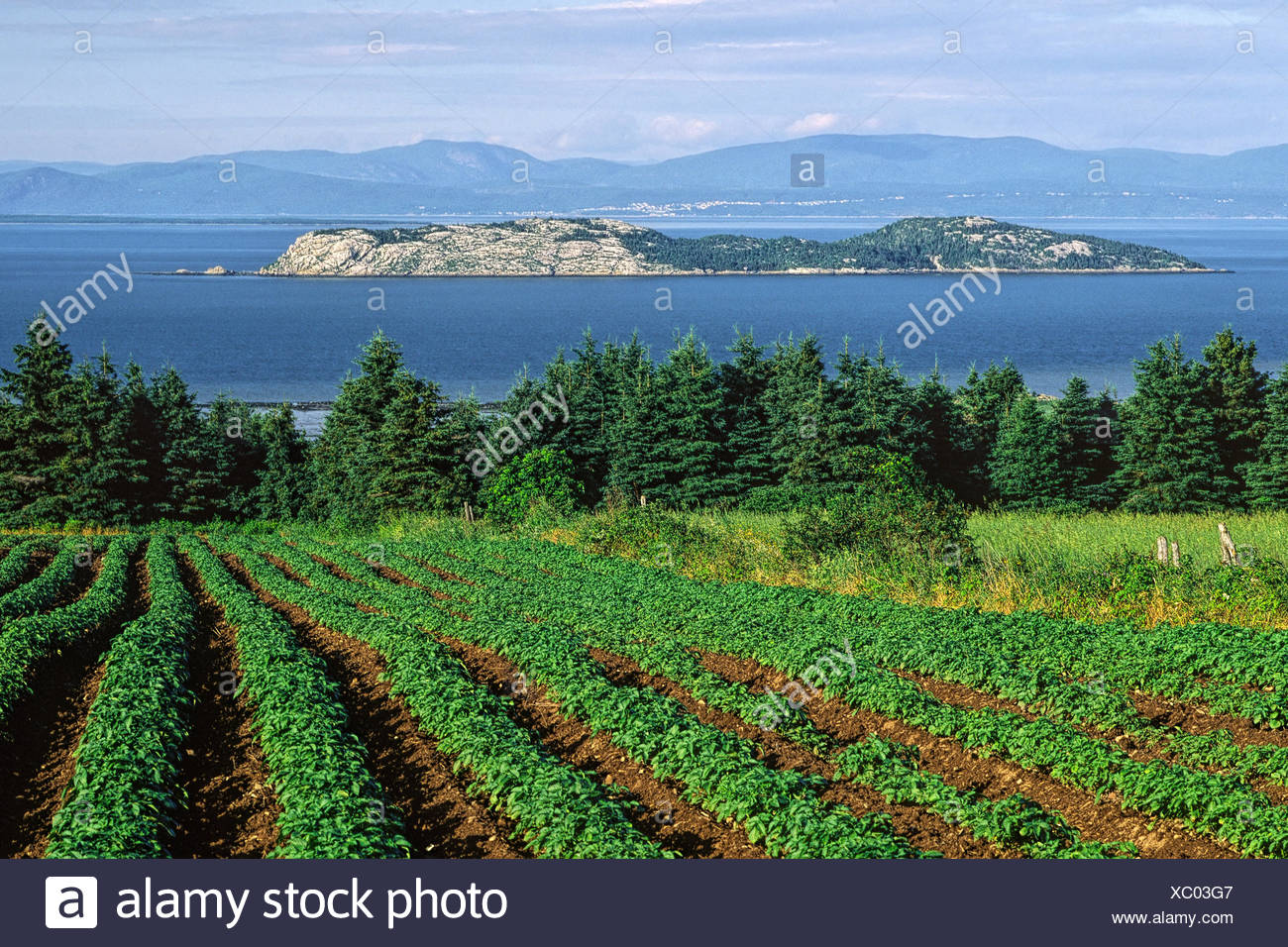 View from a potatoes field toward Pélerins Islands and the north shore of the Saint-Lawrence river, Cacouna, Lower Saint-Lawrence region, Québec, Canada - Stock Image