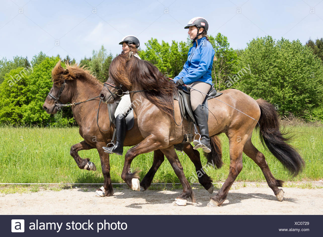 Icelandic Horse. Two women performing the toelt on stallionse. Austria - Stock Image