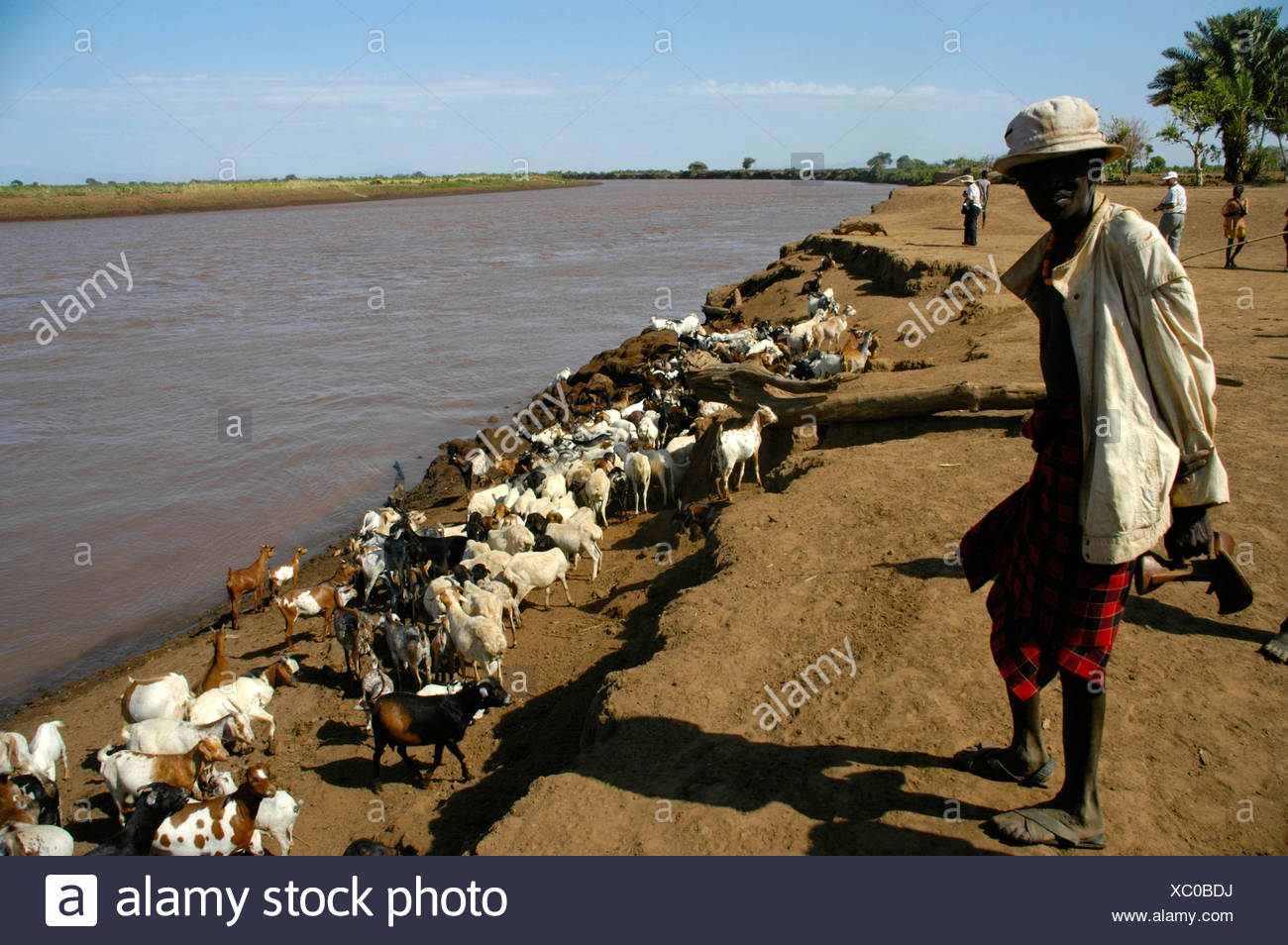 Shepard with goats at Omo River, Dashenesh people, Ethiopia, Africa - Stock Image
