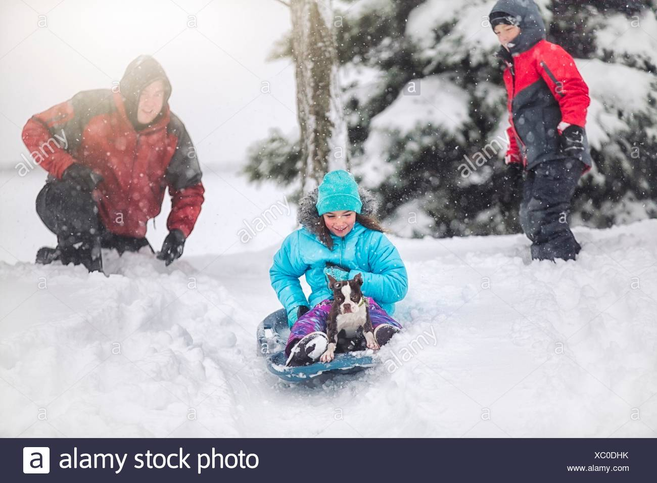 Father, son and daughter sledging with Boston terrier puppy on snow covered hill smiling - Stock Image